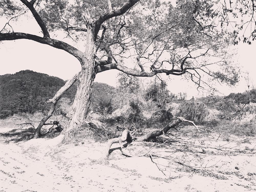 自分を枯らす木